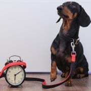 Our Hours at Walk-In Veterinary Care Apollo Beach FL