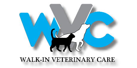 Veterinarian | Walk-In Veterinary Care Apollo Beach FL 33572